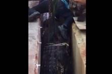 Crocodilo morre após ser resgatado de barragem
