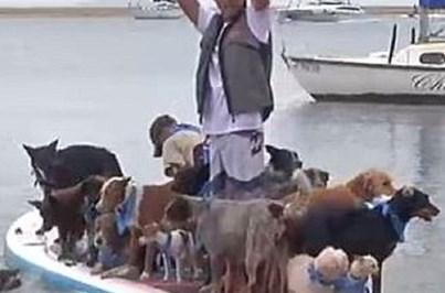 Surfista equilibra 25 cães em prancha