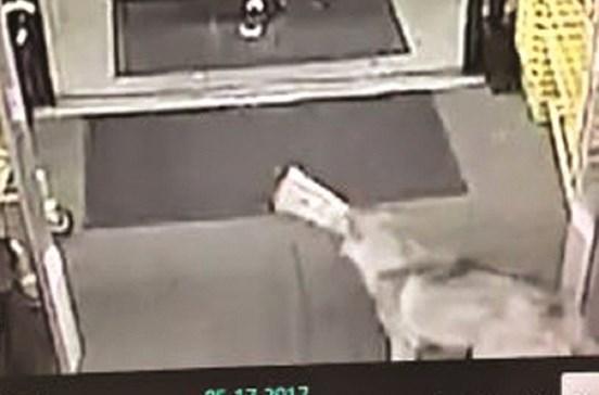 Cadela foi detida por roubar pão