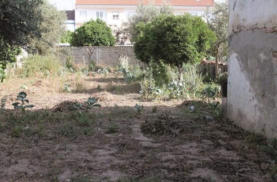 Idoso espancado a cultivar horta