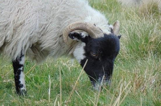Pastor morto por carneiro em Arcos de Valdevez