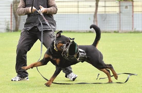 Donos de cães vão ser treinados