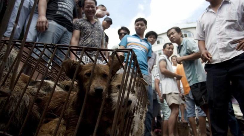 Proibida venda de carne de cão em festival da China