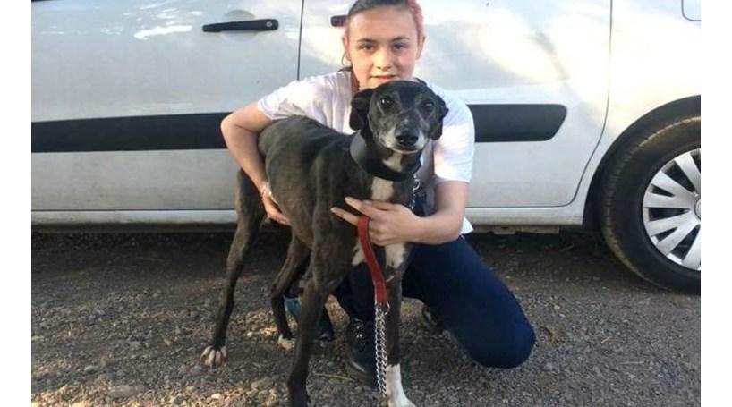 Cão roubado encontra dona passados três anos
