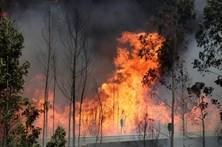 Reforma florestal prevê proibição de novas plantações de eucaliptos