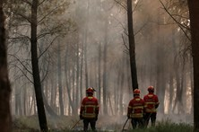 Agricultores de Coimbra exigem combate à calamidade dos incêndios