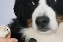 Cão aterrorizado por pequeno hamster