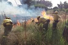 Extinto incêndio florestal no sul de Espanha