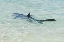 Tubarão que deu à costa em Maiorca foi morto