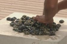 Encontrado corpo de mariscador desaparecido no Tejo