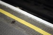 Rato causa pânico em carruagem de metro
