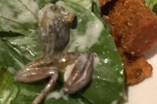 Mulher encontra sapo morto em salada