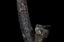 Museu exibe pénis de homem que morreu erecto