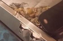 Invasão de caranguejos lança pânico em aeroporto