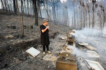Costa garante indemnizações rápidas às vítimas do fogo