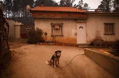 Toneladas de palha e rações para alimentar animais atingidos pelos fogos
