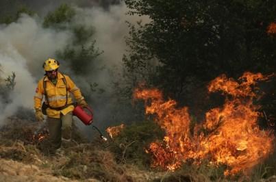Incêndio em Pedrógão Grande deixou mais de 200 no desemprego