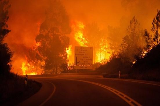 Governo quer ordenamento florestal inscrito até 2020 em todos os PDM