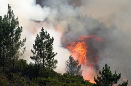 PJ deteve presumível incendiário em Viseu