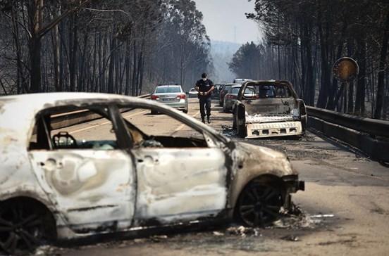 Traídos pelo motor dos carros na fuga das chamas