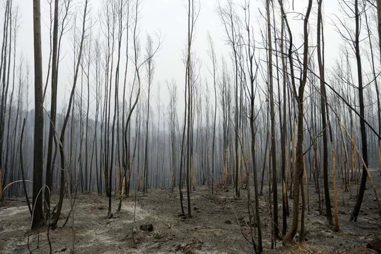 Banco de terras só daqui a um ano — Reforma das florestas