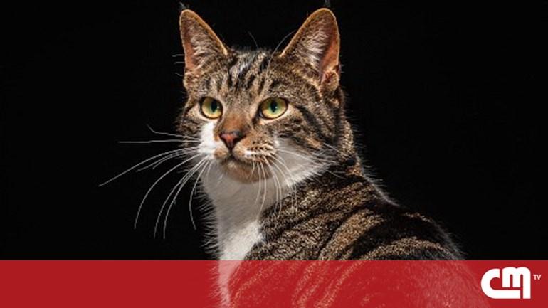 """Resultado de imagem para França: 200 gatos mortos por """"assassino em série"""""""
