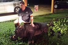 Homem salva família de porco selvagem gigante