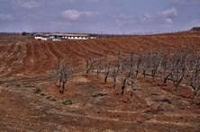 Coreia do Norte arrisca grave escassez de alimentos devido à seca