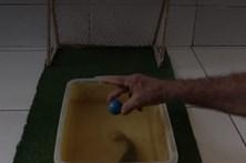 """""""Ronaldo aquático"""", o peixe-gato que é perito a marcar penálties"""