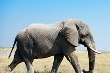Elefante mata turista espanhol em parque natural