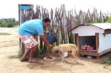Vende casa para cuidar de animais abandonados