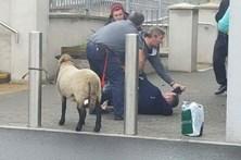 Banido do Lidl por ir às compras com ovelha