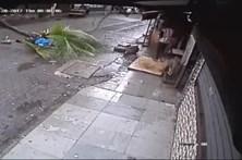 Apresentadora de TV esmagada por coqueiro