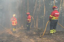 Fogo em Penacova mobiliza quase 300 operacionais