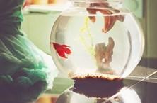 Corta peixe ao meio em disputa familiar