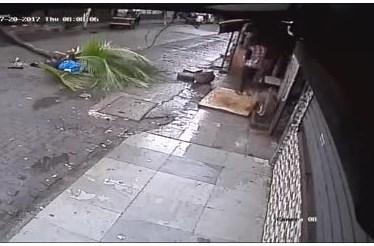 Apresentadora de TV morre esmagada por coqueiro