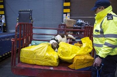 PAN pede menos exportação de animais em viagens longas