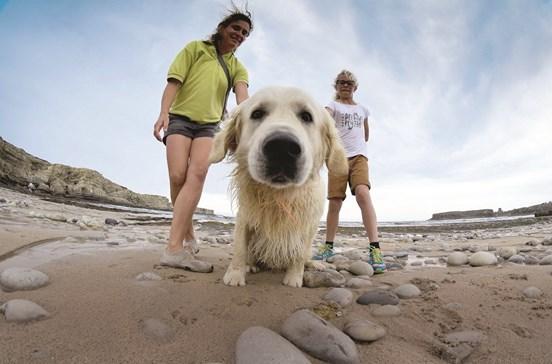 Saiba como planear as férias com os animais de estimação