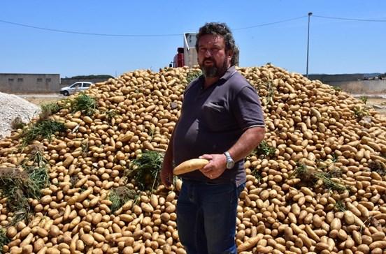 """Produtor oferece """"700 a 800 toneladas"""" de batata à população"""