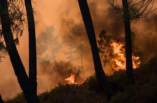 Mil pessoas deixam tudo para trás ao fugir do fogo