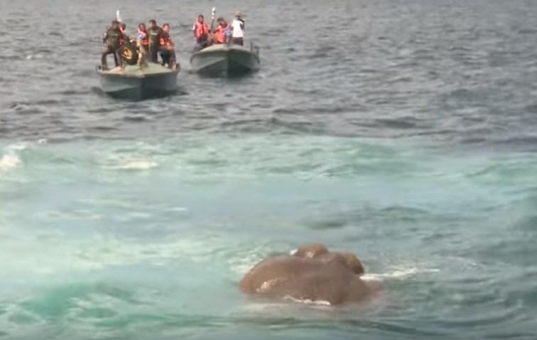 Marinha resgata elefante em alto mar