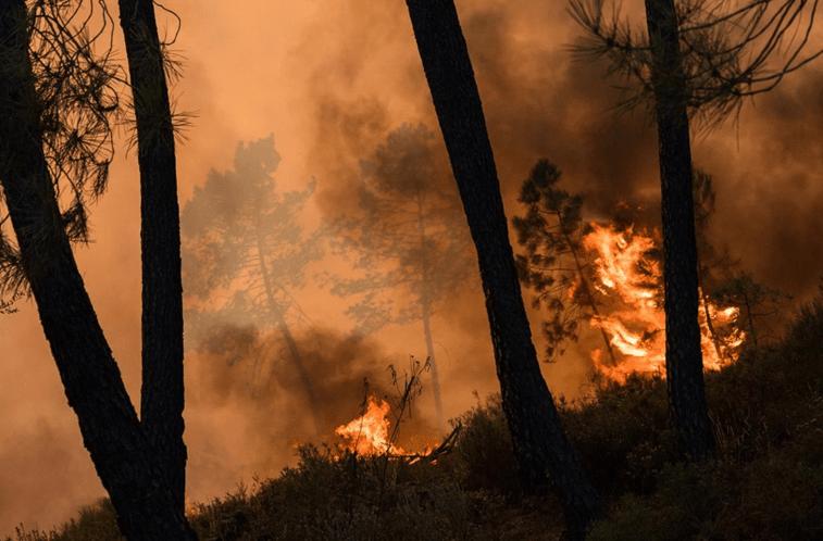 Resultado de imagem para Incêndios em 2017: 118 mil hectares ardidos, 8551 ocorrências e 71 detidos