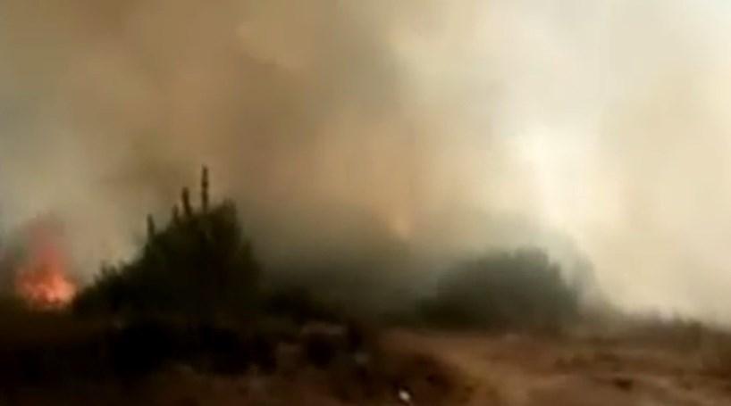 Fogo em zona de mato no Seixal