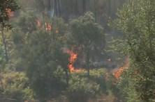 """Associação para investimento florestal critica proposta """"pouco séria"""" do Governo"""