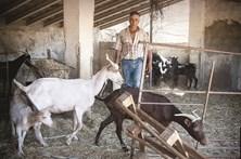Produtores agrícolas sem água para dar de beber aos animais
