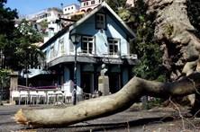 Largo onde caiu árvore na Madeira já tinha historial de queda de galhos