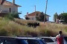 Touro bravo à solta em Arruda dos Vinhos fere quatro e danifica 10 carros