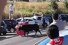 Quatro feridos por touro que fugiu em Arruda dos Vinhos