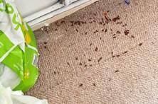 Corpo em decomposição deixa vizinha com casa repleta de larvas