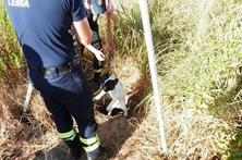 Cão resgatado a 4 metros do solo